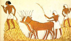 egyiptomi-parasztok-mezogazdasagi-munkakat-vegeznek_45um5b1t